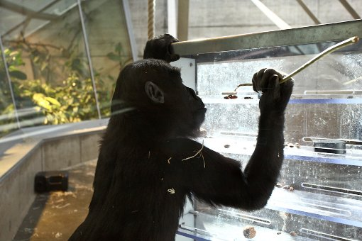 Das neue Affenhaus ist eröffnet