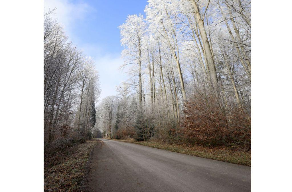 Der Waldweg zwischen Malmsheim und Perouse hat Vor- und Nachteile. Asphaltiert wird er in jedem Fall nicht. Foto: factum/Simon Granville