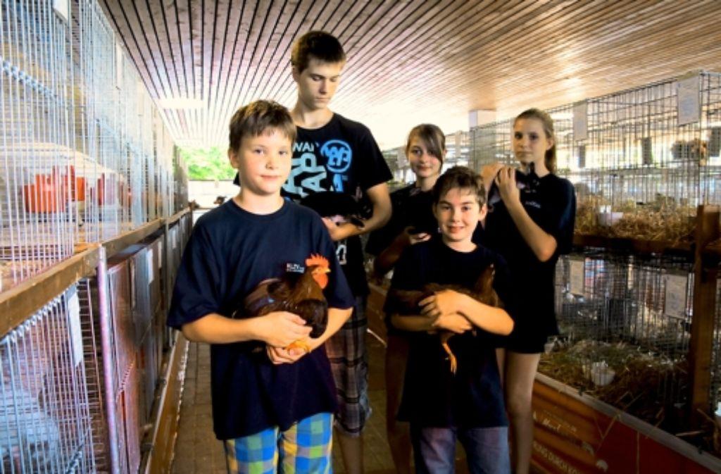 Mindestens 400 Besucher sahen sich bei großer Hitze die Kaninchen, Tauben, Gänge, Enten und Hühner   an. Foto: Malte Klein