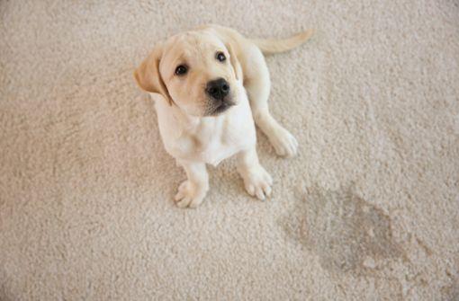 Uringeruch aus Teppich entfernen