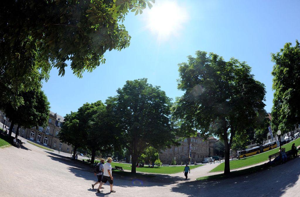 Laubbäume sind gut fürs Stadtklima. Foto: dpa