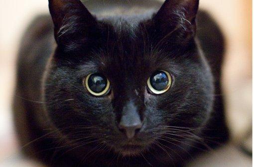 Kätzchen legt Verkehr auf Autobahn lahm