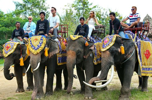 Shitstorm nach Ritt auf Elefanten