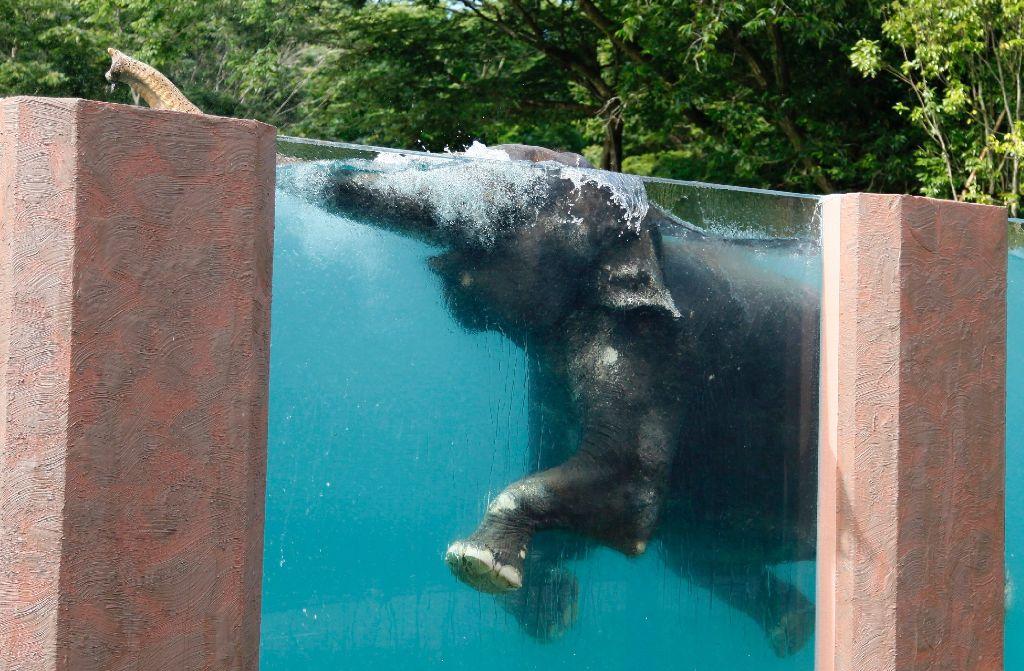 Elefanten lieben es offenbar, im Wasser zu planschen. Foto: AP