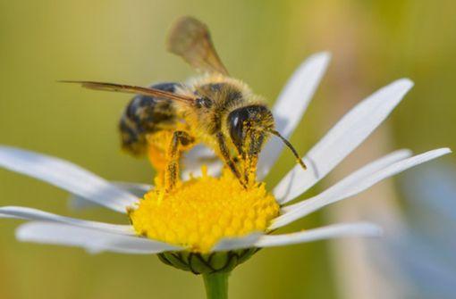 CDU geht auf Bienen-Volksbegehren ein