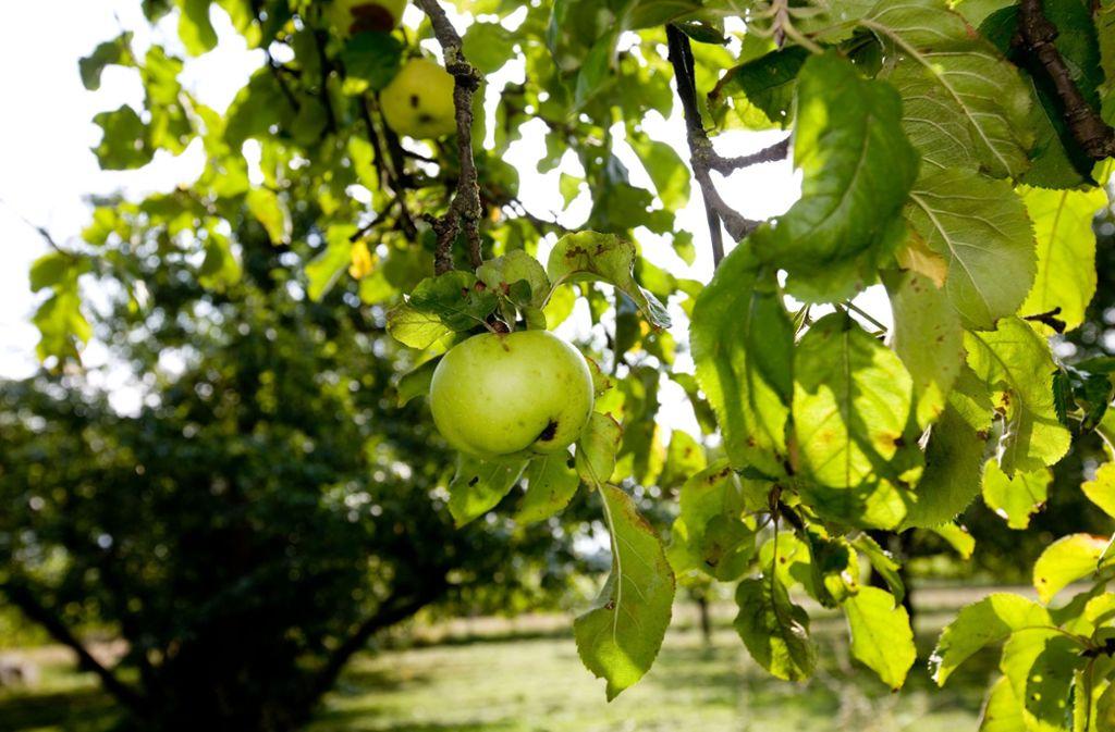 Einen bis zu dreimal so hohen Preis erzielen  Äpfel, die ein Biosiegel haben. Foto: Archiv  Rudel