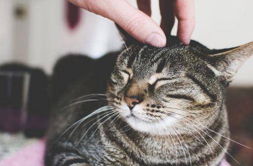 Erfahren Sie, wie und warum Katzen schnurren. Das steckt hinter dem Verhalten.