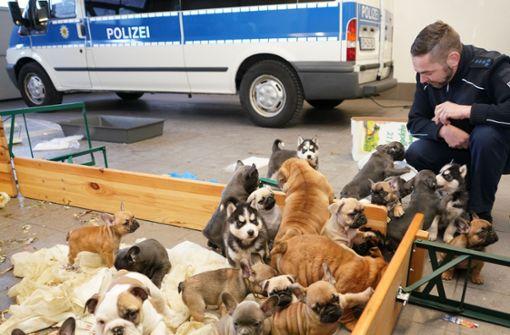 """37 Hundewelpen """"erbärmlich in Fahrzeug gepfercht"""""""