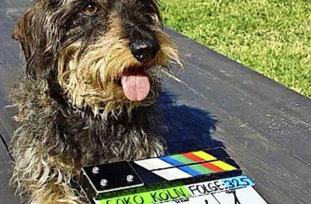 Beim Hunde-Casting können Vierbeiner zeigen, womit sie bei den Zweibeinern Foto: privat