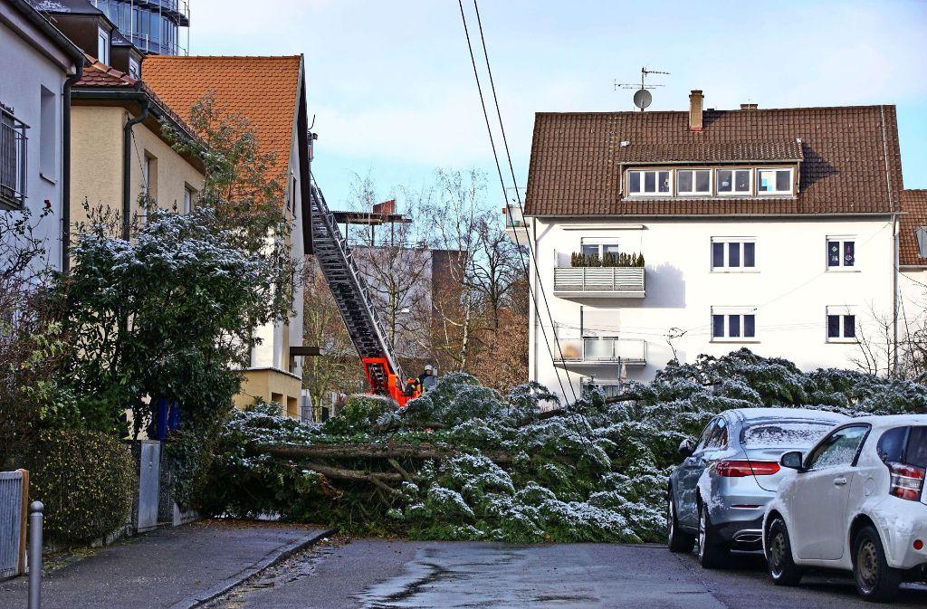 Hildegard Bihr hat live mitbekommen, wie der Baum am vergangenen Freitag quer über die Leinfelder Straße gekippt ist. Foto: Holowiecki, Archiv SDMG
