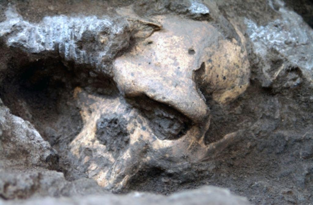Die Knochen von Frühmenschen halten für die Forschung sicher noch manche Überraschung bereit Foto: dpa