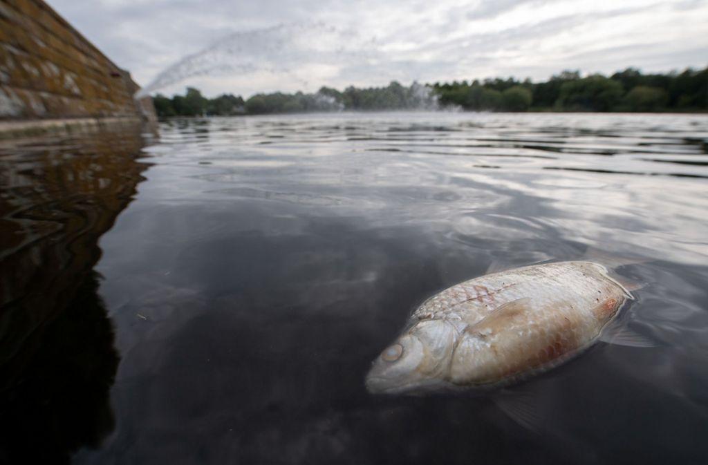 Angler sammelten rund 50 000 tote Fische aus dem See. Foto: dpa