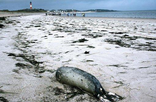 Nordsee schwemmt täglich tote Tiere an