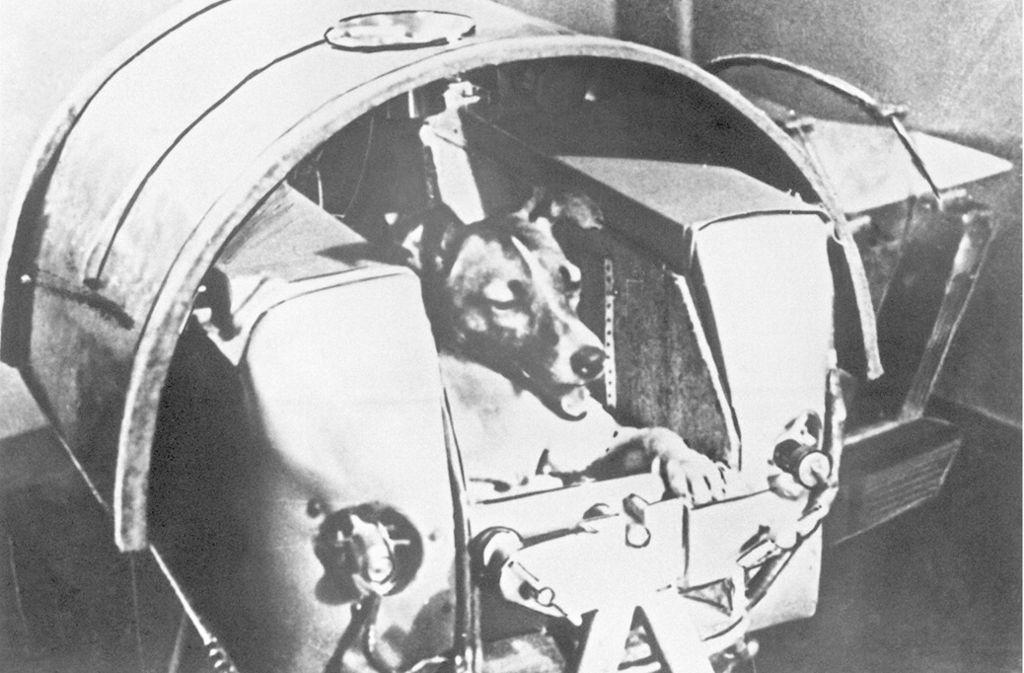 """Noch vor dem ersten Menschen flog 1957 die damals zweijährige Mischlingshündin """"Laika"""" ins All. Sie überlebte den Flug im sowjetischen Forschungssatelliten  Sputnik 2 nicht. Foto: dpa/UPI"""