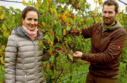 Hohenlohischer Obstbauer will Trends setzen