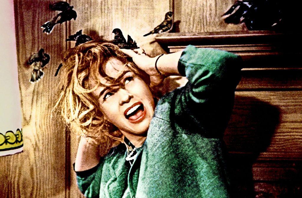 """Attacken vor und hinter der Kamera: Tippi Hedren 1963 in den """"Vögeln"""" Foto: Universal"""