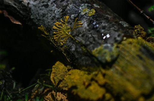 """Eines der außergewöhnlichsten Wesen auf dem Planeten – der  """"Blob"""""""