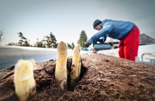 Bauern fordern Passierschein für Erntehelfer