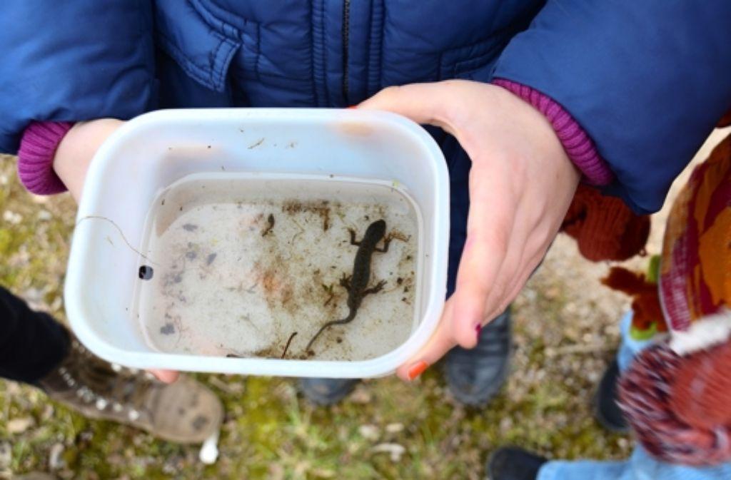 Kinder machen am Wartberg Erfahrungen mit der Natur. Foto: Birgit Braun