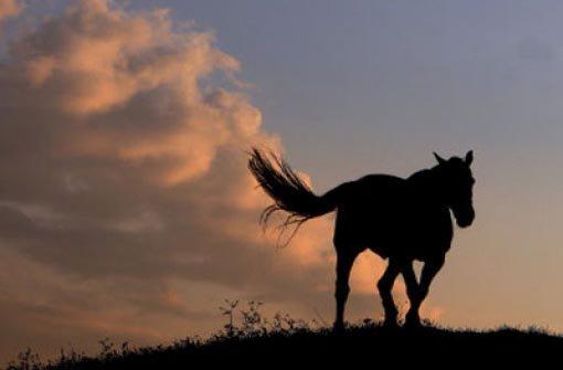 24.10.: Pferd büxt aus und stirbt