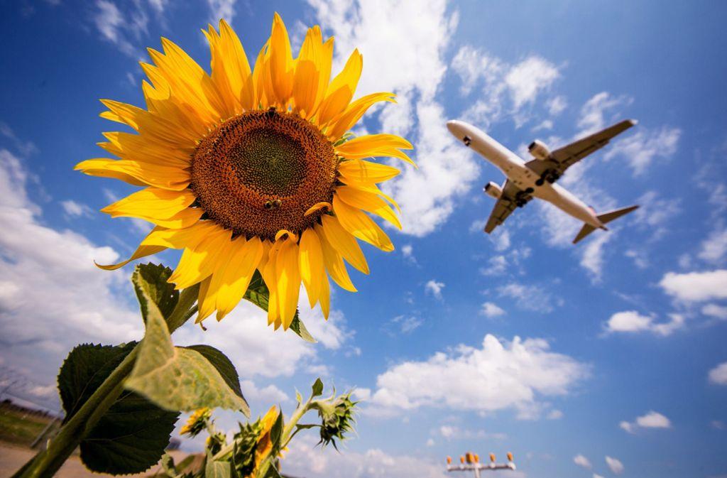 Fliegen soll teurer werden. Foto: dpa/Christoph Schmidt