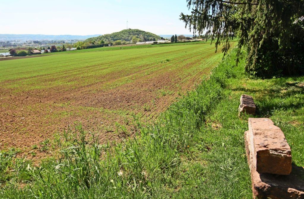 Auf diesen Äckern am westlichen Rand von Korntal sollen dereinst 800 Menschen leben. Foto: factum/Granville