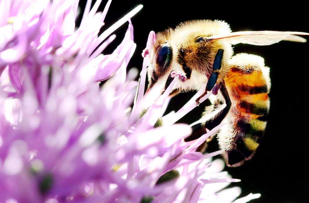 Die Regierung will Insekten besser schützen. Foto: dpa