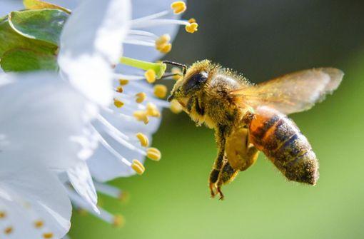 Freilandverbot von Bienen-Giften?