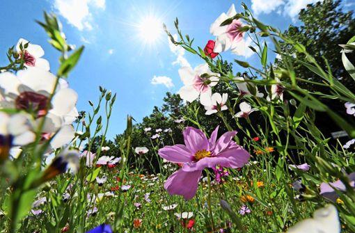 Aus einem öden   Gleis soll ein Blüh-Paradies werden