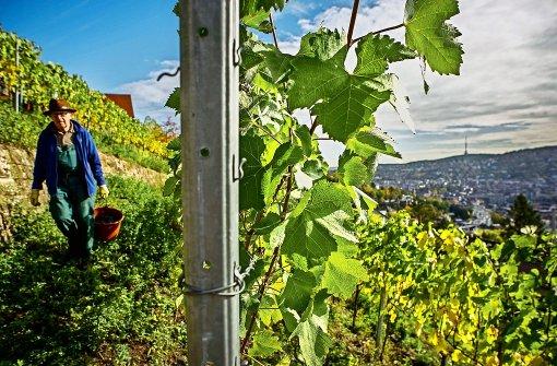 Neustart beim Weingut der Stadt Stuttgart