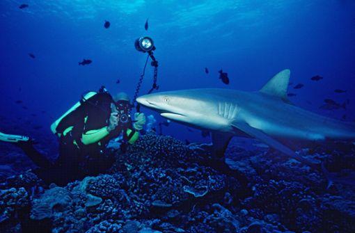 Skurriles Video zeigt Taucher und Hai beim Paartanz