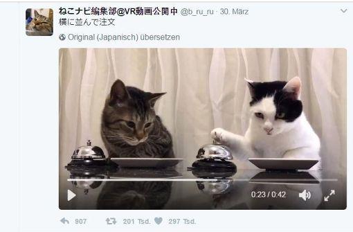 Wenn die Katze zweimal klingelt