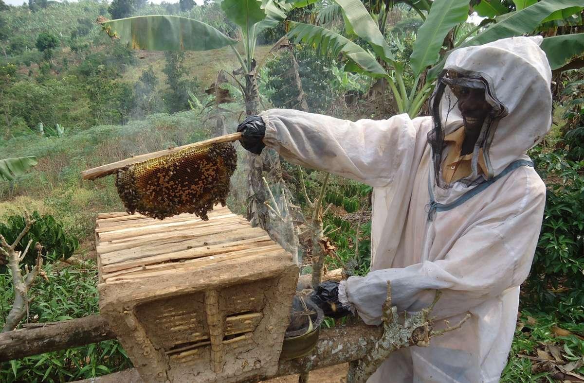 Die Imkerei ist auch in Ostafrika verbreitet. Honig ist ein beliebtes Nahrungsmittel zum Beispiel in der Küche Ugandas. Bei einem Projekt sollen mehr Menschen die Honigproduktion erlernen. Foto: