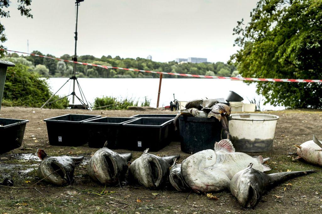 """""""Die Stadt ist nicht schuld"""": OB-Kuhn weist die Kritik an der Stadt in Zusammenhang mit dem jüngsten Fischsterben zurück. Foto:"""