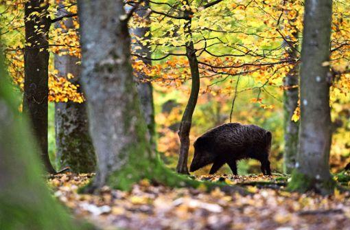 Wildfleisch verspricht noch echte Regionalität