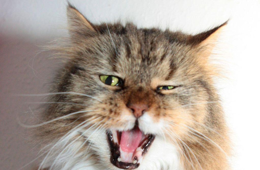 Ein Unbekannter quält in Lörrach Katzen (Symbolbild). Foto: dpa-tmn
