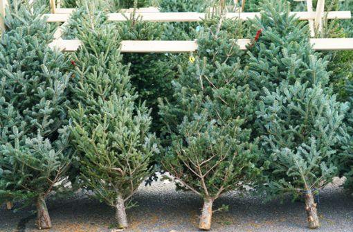 Wie viel kosten Weihnachtsbäume in diesem Jahr?