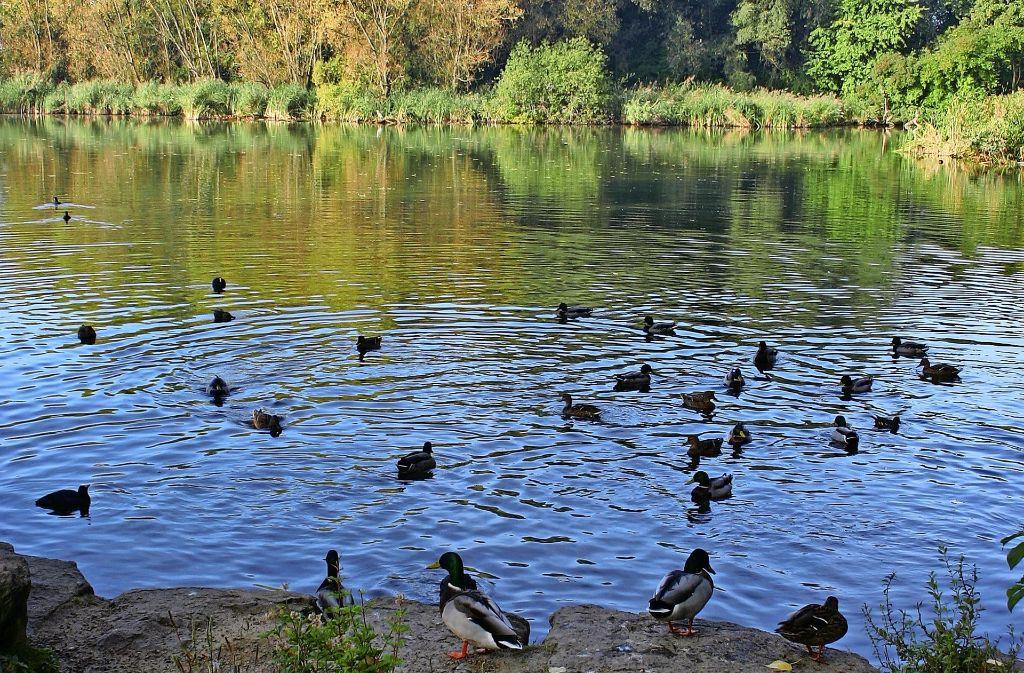 Der Probstsee ist ein Kleinod und ein Sorgenkind zugleich. Foto: Archiv Kai Müller