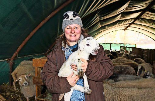 Ein Verein soll künftig das Schafsfutter sichern