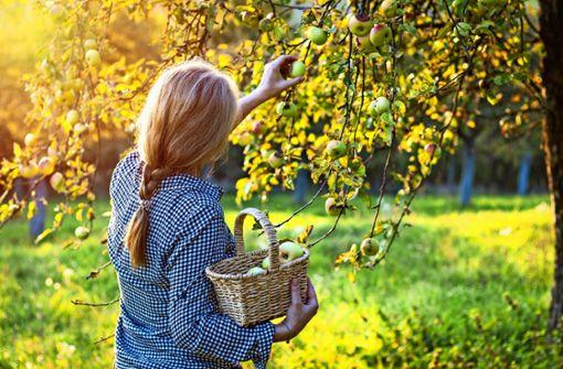 Pflanz den Apfelbaum!