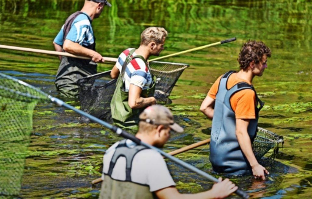 Freiwillige Helfer waren am Dienstag und am Mittwoch zu Dutzenden unterwegs, um noch tote Fische aus der Jagst zu fischen – hier bei Elpershofen Foto: dpa