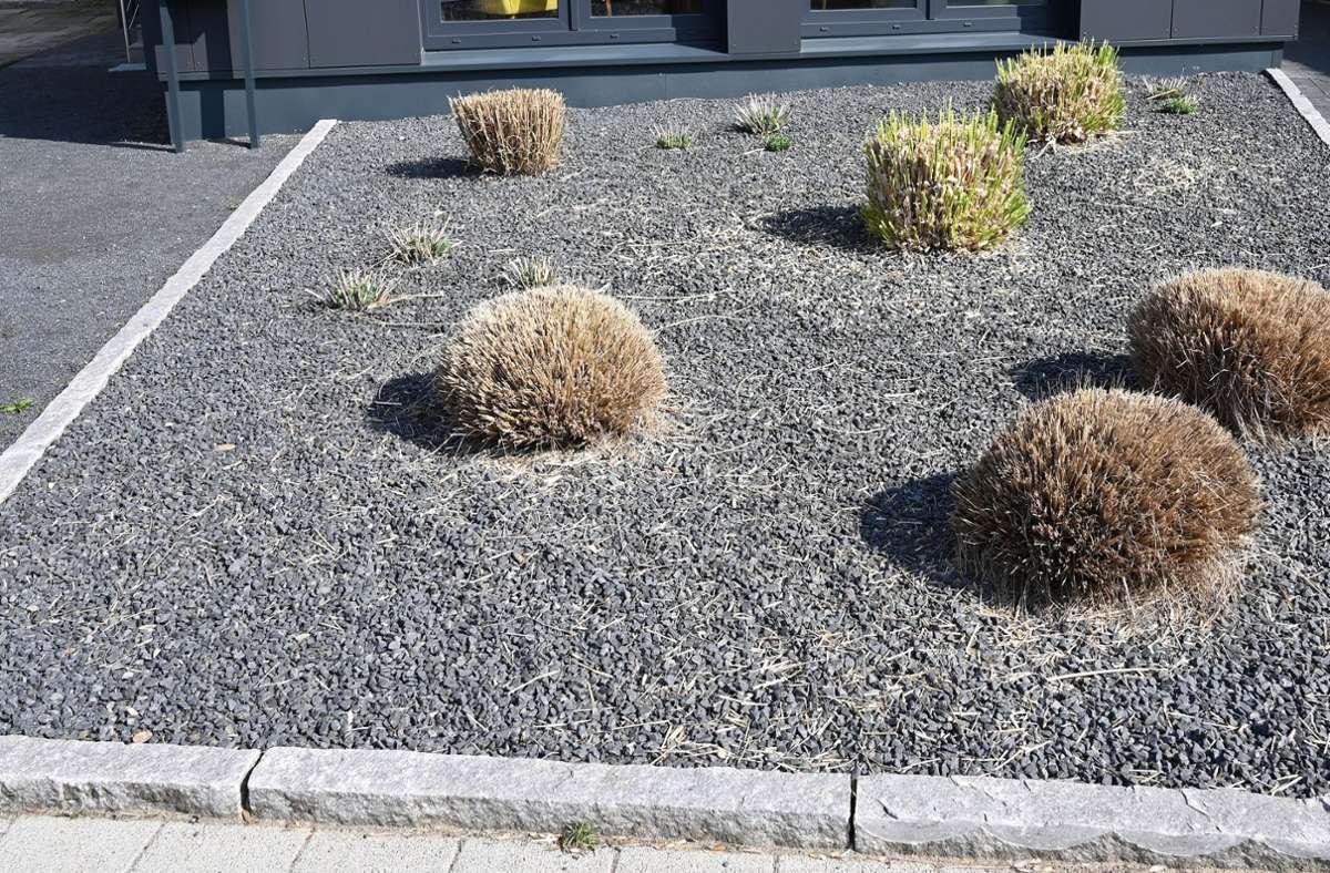 Pflanzen ragen in Bremen aus einem Vorgarten mit grauen und schwarzen Kieselsteinen. Foto: dpa/Carmen Jaspersen