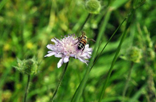 Ein Paradies  für Wildbienen