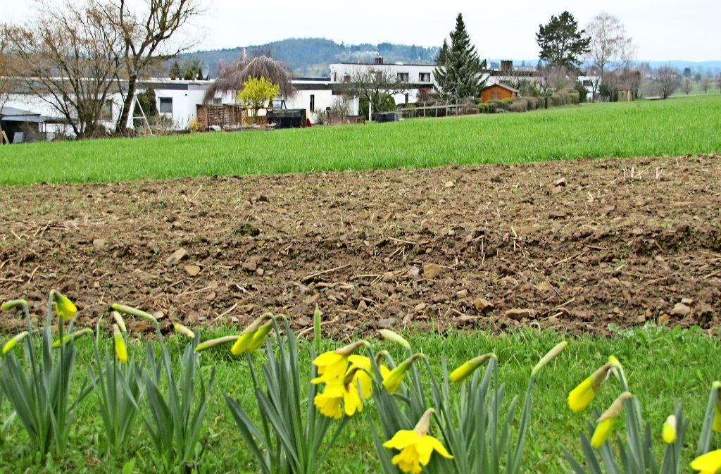 Auf Wiesen und Äckern westlich der Hasenhofstraße will die Gemeinde auf vier Hektar neue Wohnbauflächen entwickeln. Foto: Claudia Barner