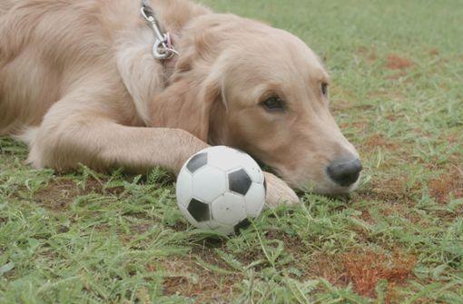 Hund Poldi tippt das Spiel Deutschland gegen Südkorea