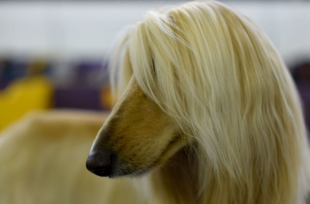 Sie Ist Nun Offiziell Der Sch 246 Nste Hund Der Welt Die