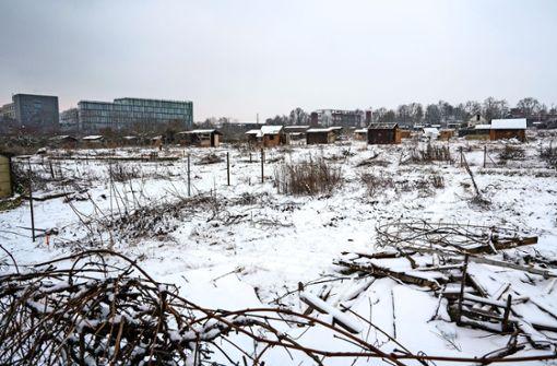 Bäume werden gefällt, Gartenlauben   zerlegt