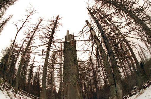 Gibt es ein neues Waldsterben?