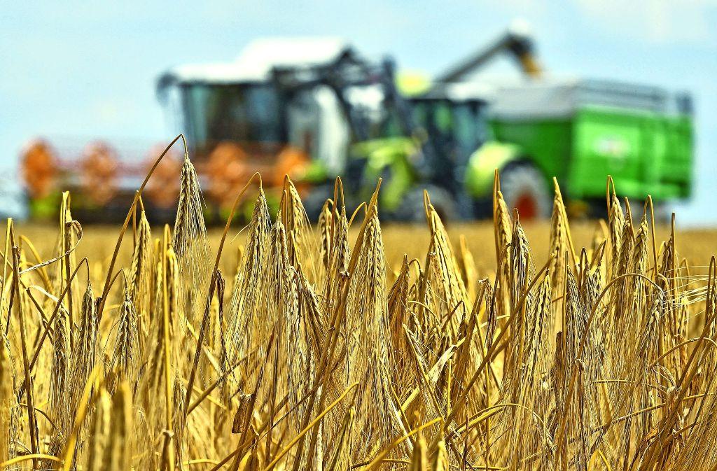 Eine genaue Prognose der diesjährigen Getreideernte – die dieser Tage in Baden-Württemberg begonnen hat – ist  nach Meinung des Bauernverbandes noch nicht möglich. Foto: dpa