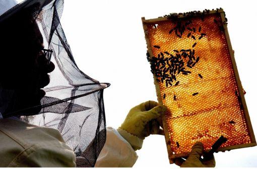 Honig – Heilmittel und Nektar der Götter